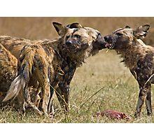 Wild Dogs Feeding Photographic Print