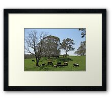 Cows in the shade. Framed Print