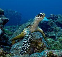 Turtle Throne by Richard  Barnden