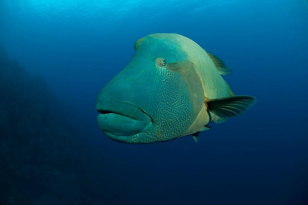 A divers best friend by Richard  Barnden