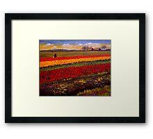 Evening Tulip Picking Framed Print