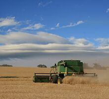 Harvest Time Grenfell Central NSW Canon D30 used by julie anne  grattan