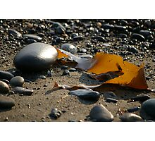 Shining Kelp Photographic Print