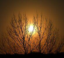 Sunset Tree by Barrie Daniels
