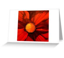 Red Cosmos Center Greeting Card