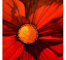 Red Cosmos Center Photographic Print