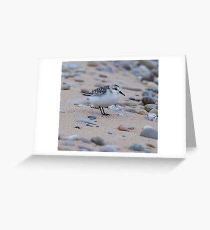 A Semipalmated Sandpiper Greeting Card