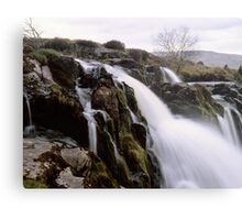 Loup o'Fintry, large format Metal Print