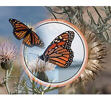 The Monarch and the Thistle Photographic Print