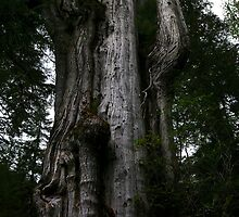 Pacific Northwest Landscapes by rdshaw