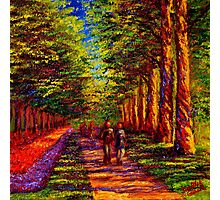 Shady Path in Keukenhof Photographic Print