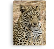 Vegetarian Leopard?  Canvas Print