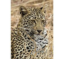 Vegetarian Leopard?  Photographic Print