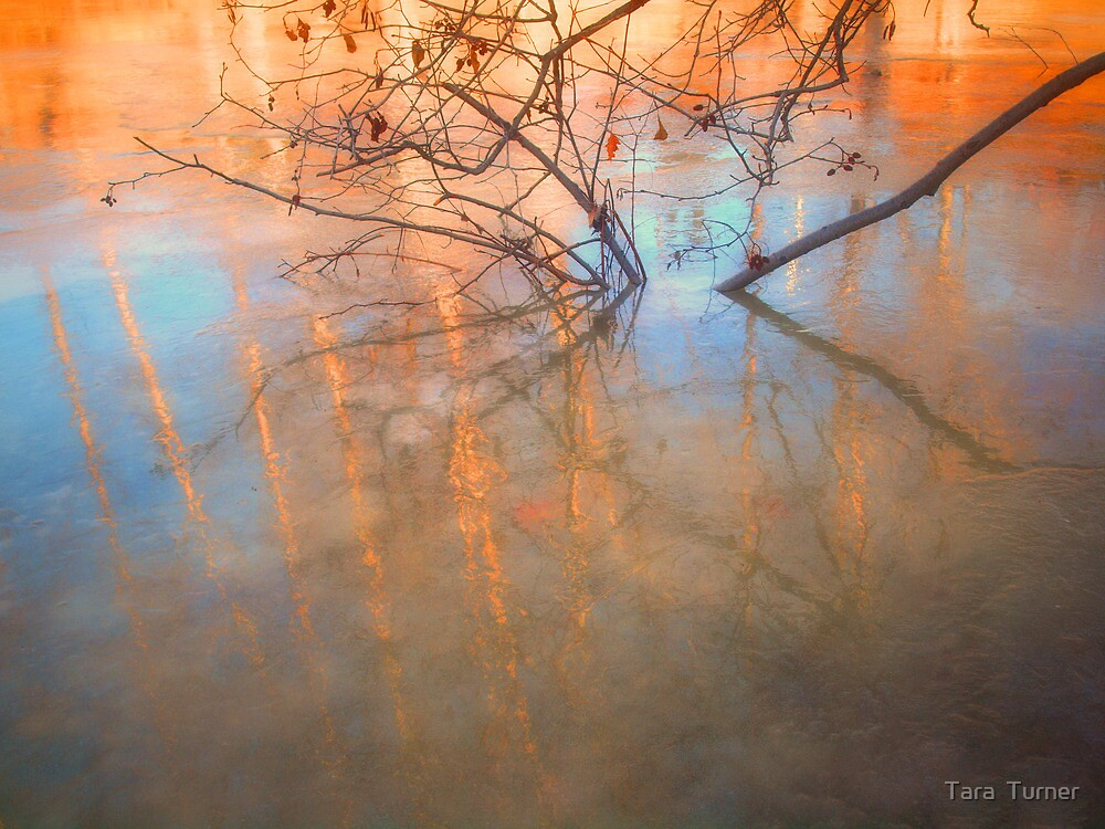 Ice Reflections 2 by Tara  Turner