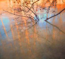 Ice Reflections 2 by Tara  Turner