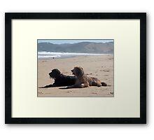Briard Beach Bums #2 Framed Print