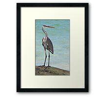 Heron at Stump Pass (Florida, USA) Framed Print