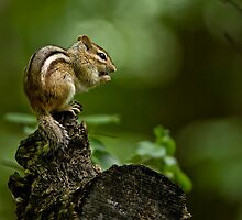 Chipmunks and Squirrels by Michael Cummings