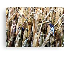 Blue Jays In the Corn Field Canvas Print