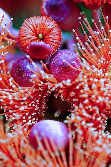 Seasons Greetings - From Australia by Sharon House