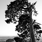 Mt. Scott Tree by Jim Felder
