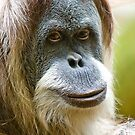 Orangutan Face by Jim Felder