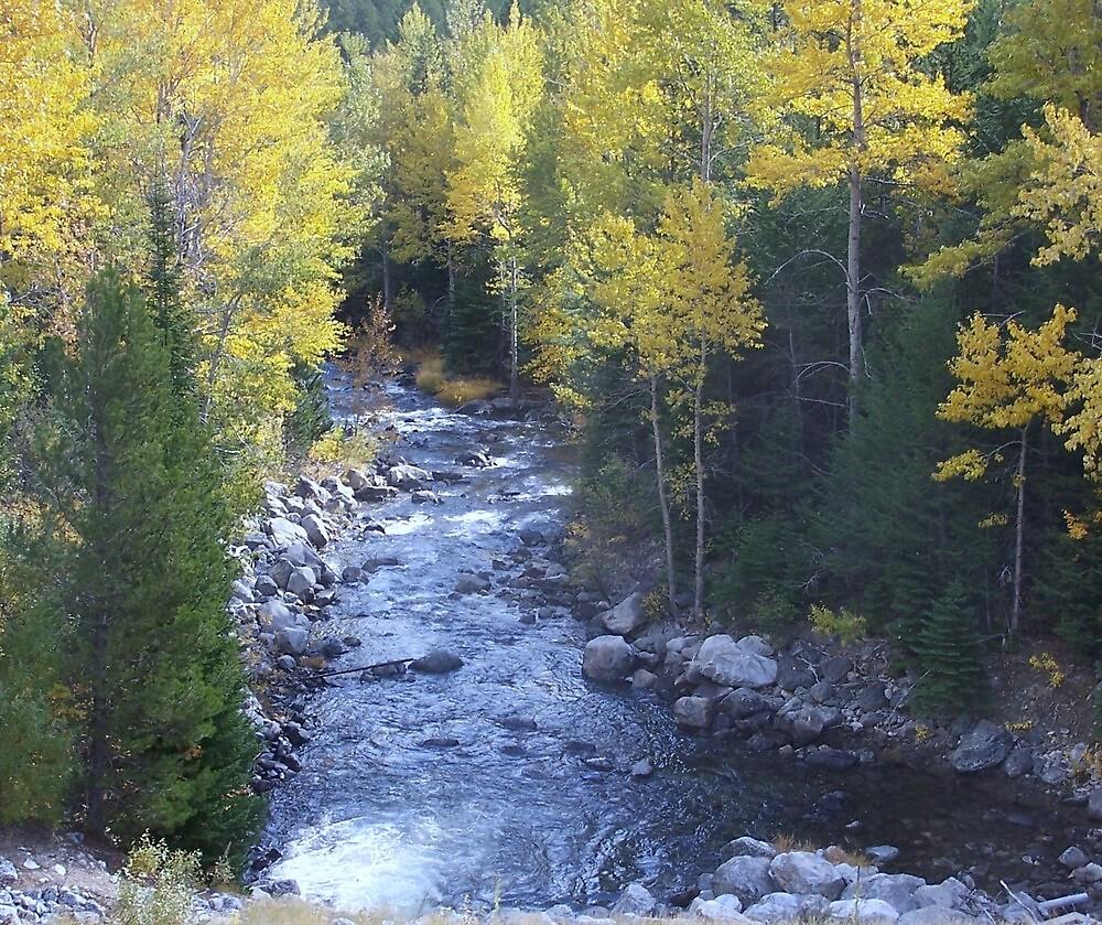 BEAR CREEK,  Montana by pocopeppygator