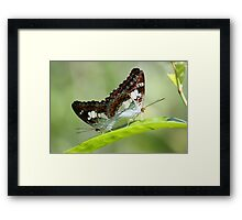 Indonesia 9 - Balinese Butterfly's Framed Print