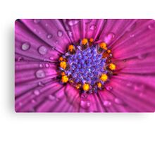 High Dynamic Range Daisy Canvas Print