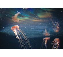 The Berlin Zoo - Jelly Fish Photographic Print