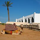 Camel in Morocco by Bruno Beach