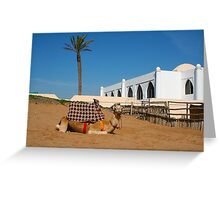 Camel in Morocco Greeting Card