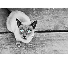 Coolio with blue eyes Photographic Print