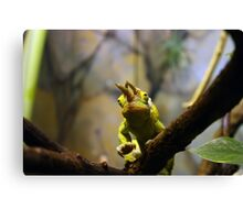 Jacksons Chameleon Canvas Print