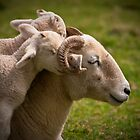 Love is... by Dave Sayer