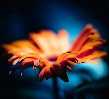 ...close... by Geoffrey Dunn