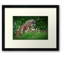 Orangutan In Flowers Framed Print