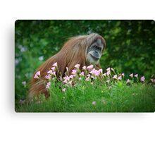 Orangutan In Flowers Canvas Print