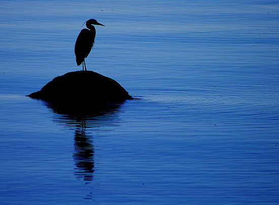 Blue Blue Heron by Al Williscroft