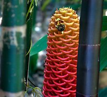 Spotted - Beehive Ginger between the Bamboo by Kerryn Madsen-Pietsch