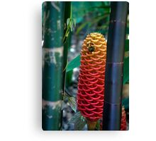 Spotted - Beehive Ginger between the Bamboo Canvas Print