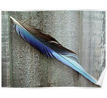 Blue Feather and Fence Poster