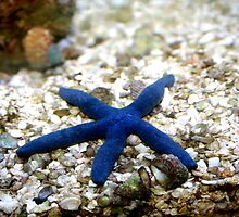 Blue Star by Charles Buchanan
