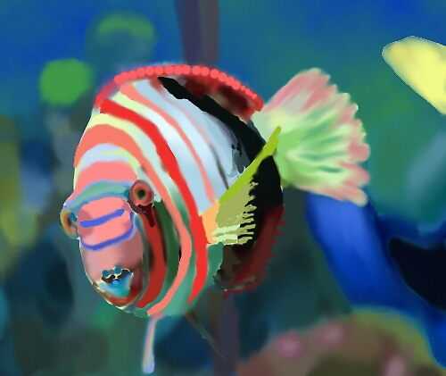 beautiful fish by sky   princess