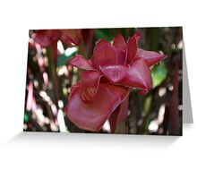 Waxy Impressions (Red Torch Ginger) Greeting Card