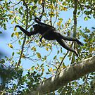 Spider monkey show  in Amazonia  by Marieseyes
