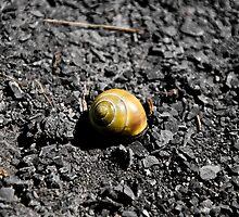 Lone Snail - Montezuma, NY by rjhphoto