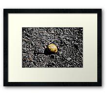 Lone Snail - Montezuma, NY Framed Print
