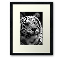 Ivory in black and white  Framed Print
