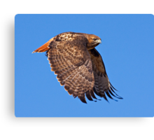 121209 Red Tailed Hawk Canvas Print